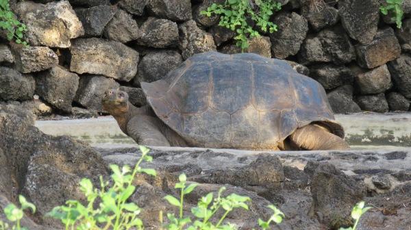 Galapagos - Février 2015 (1837)